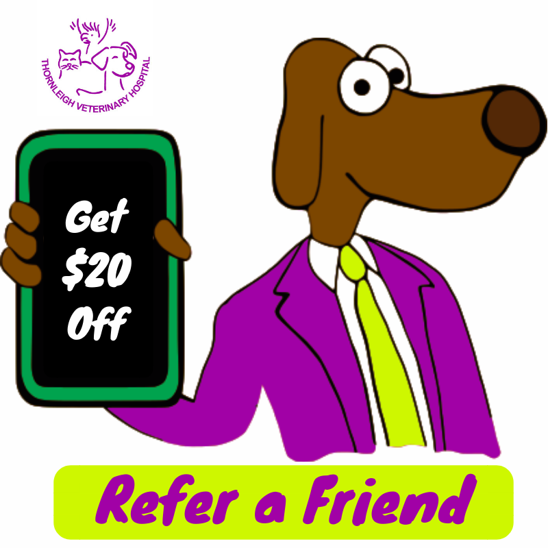 Thornleigh Vet Hospital Refer a Friend Offer