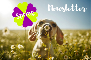 Thornleigh Vet Spring Newsletter