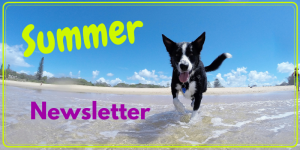 Thornleigh Vet Summer Newsletter