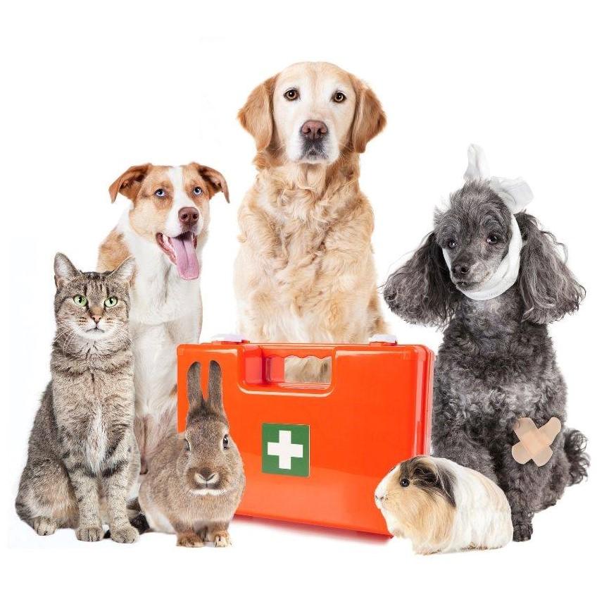 Thornleigh Vet First Aid Course