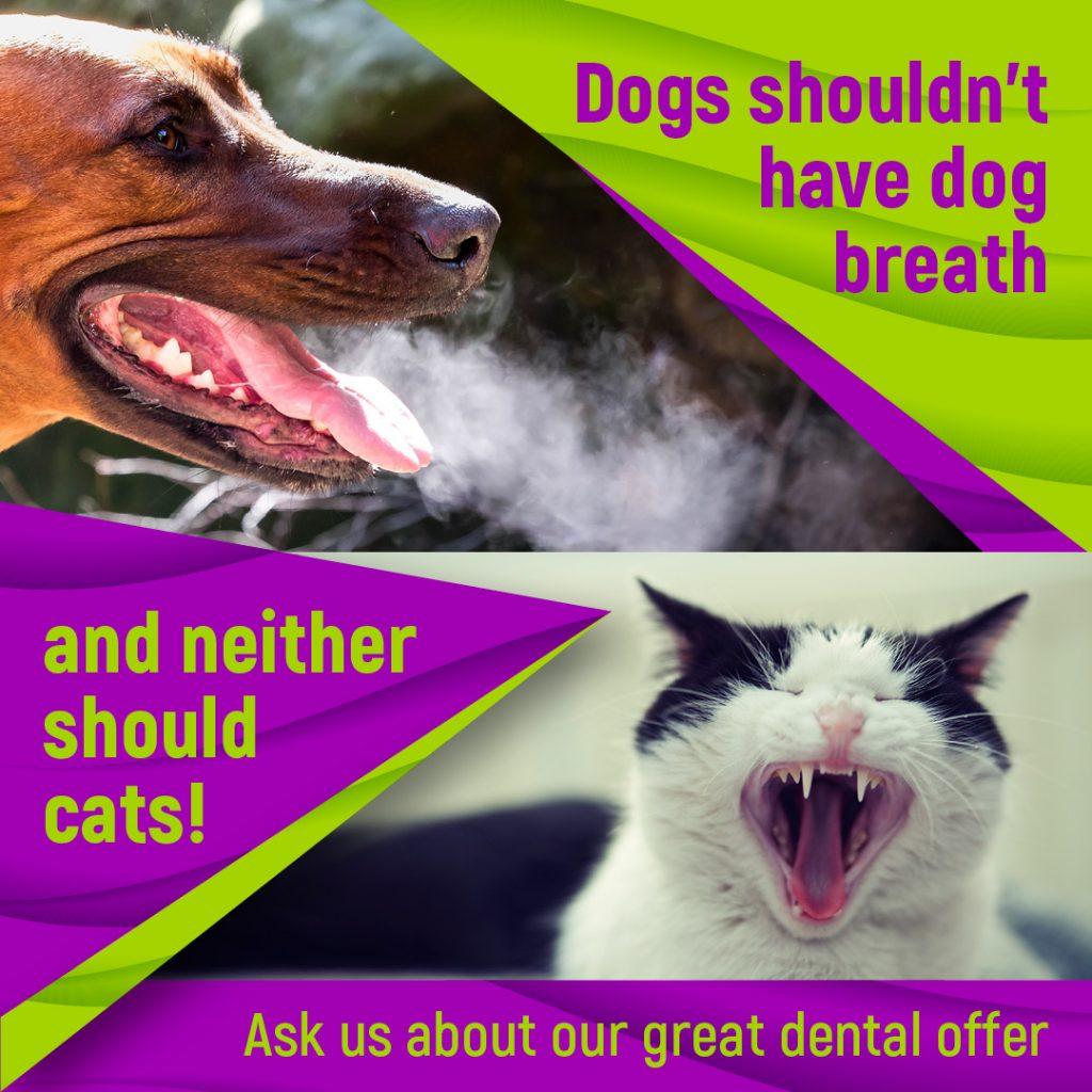 Thornleigh Vet Dentistry