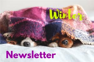 Thornleigh Vet Winter Newsletter