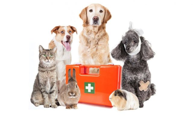 Thornleigh Vet Pet First Aid