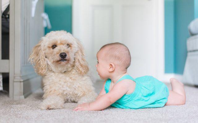 Thornleigh Vet Child & Dog Safety