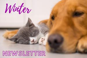 Winter Newsletter Thornleigh Vets