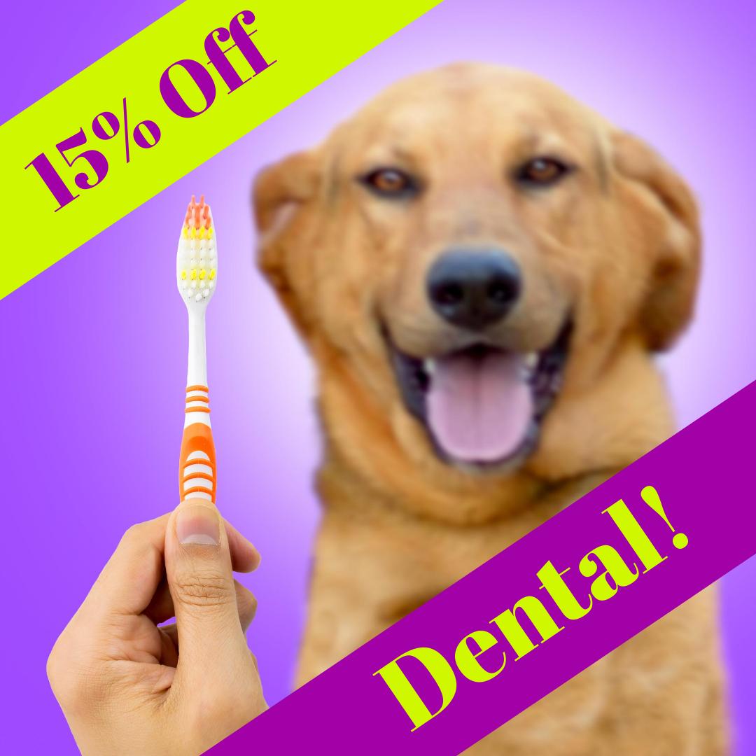 Thornleigh Vet Dental Month