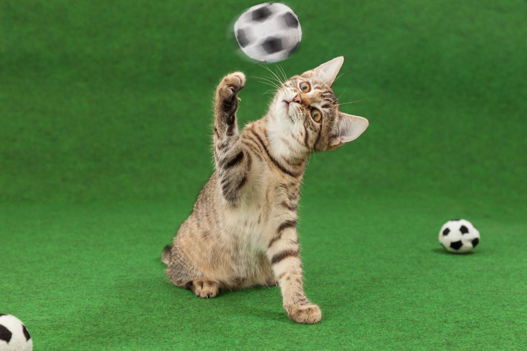 Thornleigh Vet Cats