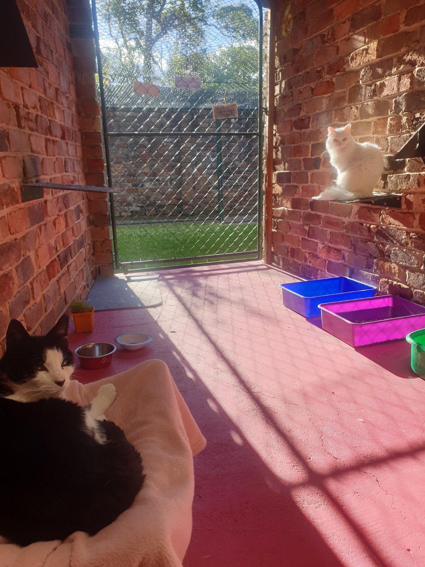 Thornleigh Cat Condos