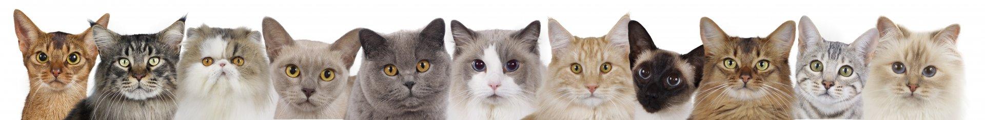 Thornleigh Cats